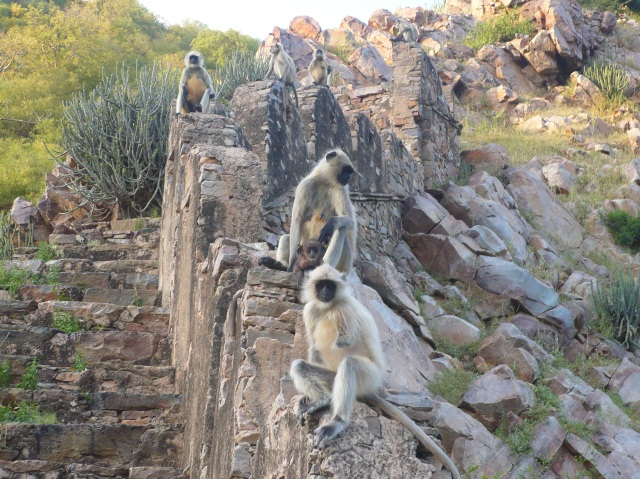 The Monkey Temple, Galtaji