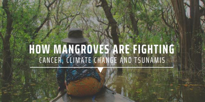 3. Mangroves