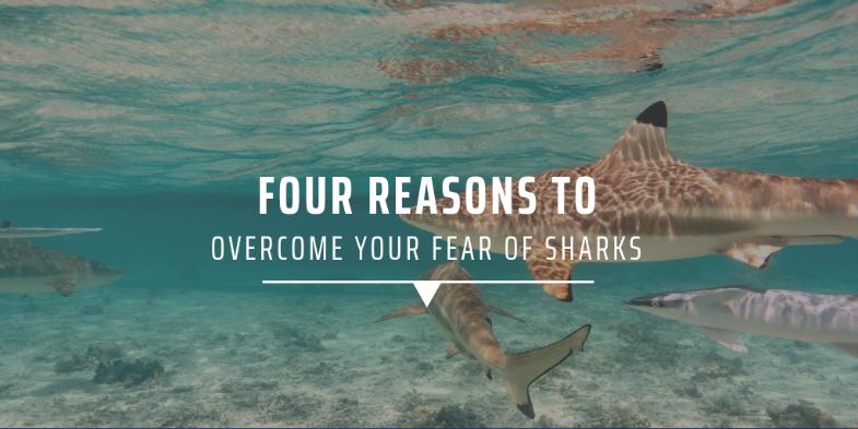 5. Sharks