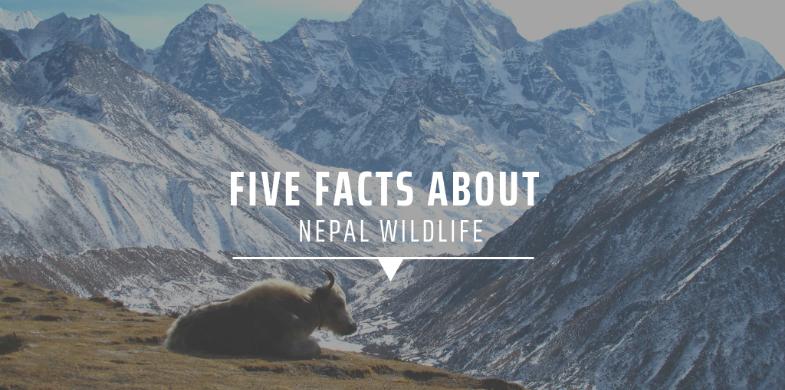 7. Nepal